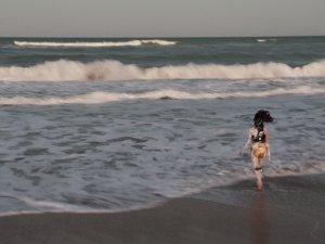 Julie Pichavant Les poissons ne posent pas de question -Los peces no hacen preguntas TFM Tampico Mexico